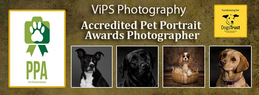 pet portrait awards 2017