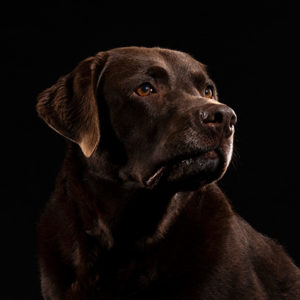 VIPS Photography pet portrait noir