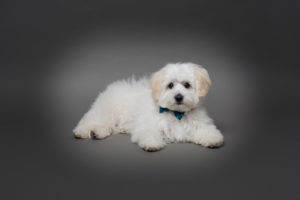 VIPS Photography pet portrait on grey